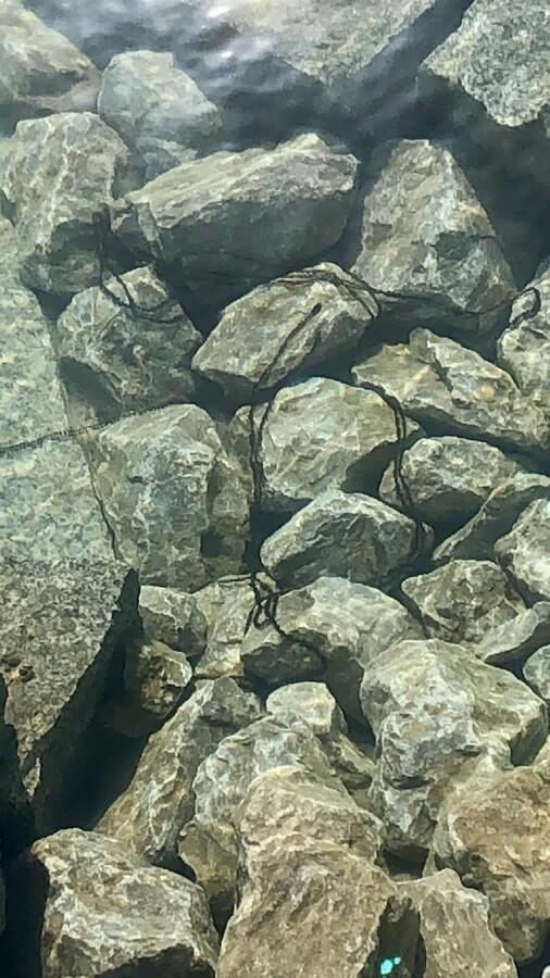 Krötenlaich