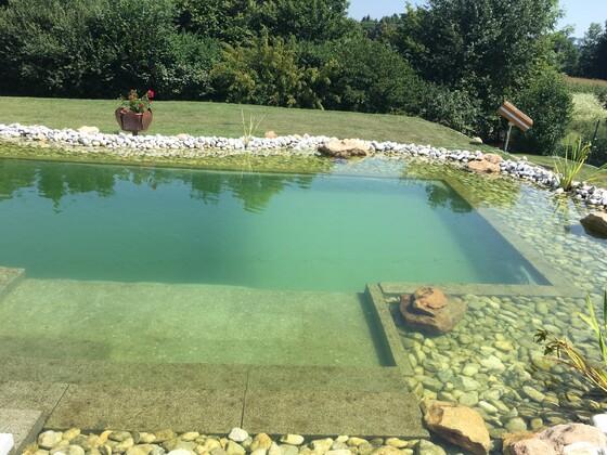 Teich letztes Jahr im Herbst