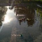 Schwimmteich Brandenburg 90 %fertig