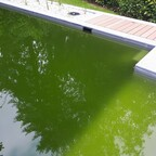 Die grüne Hölle....