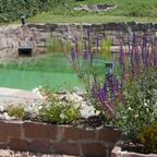 Schwimmteich Eigenbau mit Hilfe von Mielke, Hr. Glenk und Hr. Latzel. Status nach 3 Jahren!