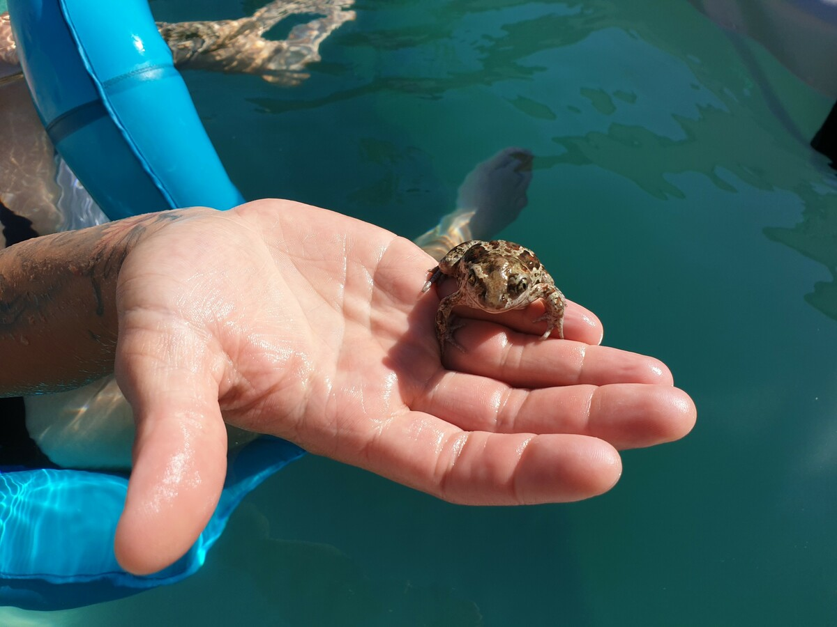 Froschn