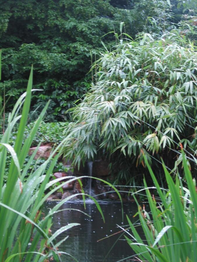 irgendwo im Dschungel