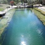 Wasser 1 Monat alt - Starkes Algenwachstum