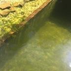 Wasser wieder klar!