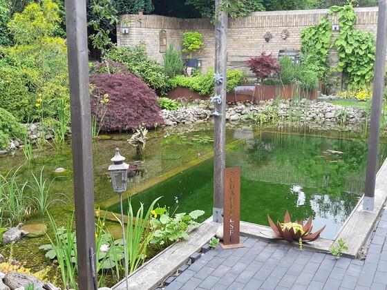Juni 2020...wenn die Pflanzen im Teich mal auch so schnell wachsen würden wie die am Rand :-)