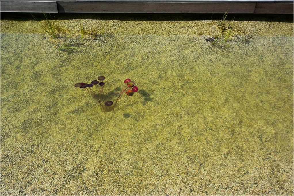 von algen nicht wachsenden pflanzen und 0 phosphat. Black Bedroom Furniture Sets. Home Design Ideas