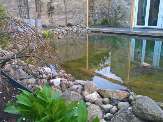 Am Teichrand beginnt es auch grün zu werden